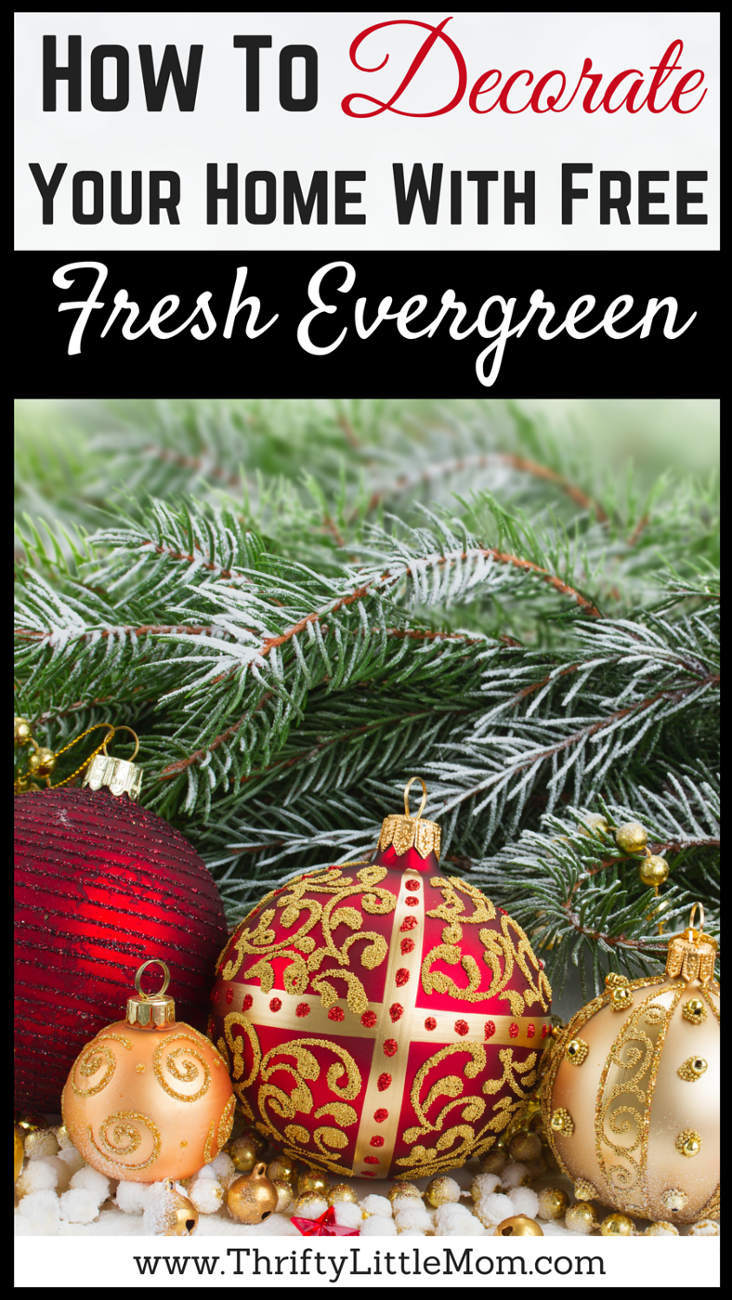 How To Decorate Your Home With Free Fresh Evergreen. Fill your home with the sites and scents of the holiday season