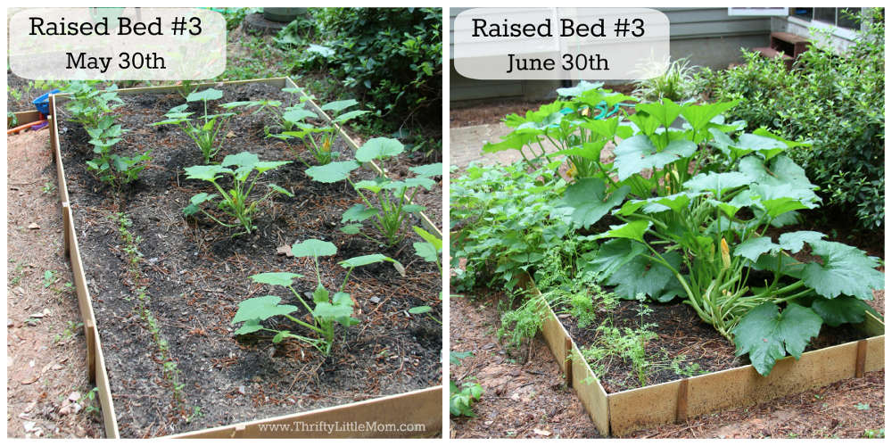 DIY Raised Garden Bed Before & After 3