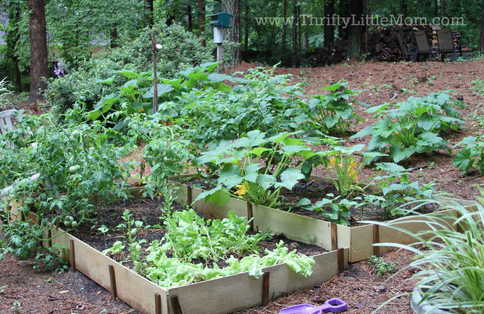 Recommended Spacing For Zucchini Plants In A Raised Bed