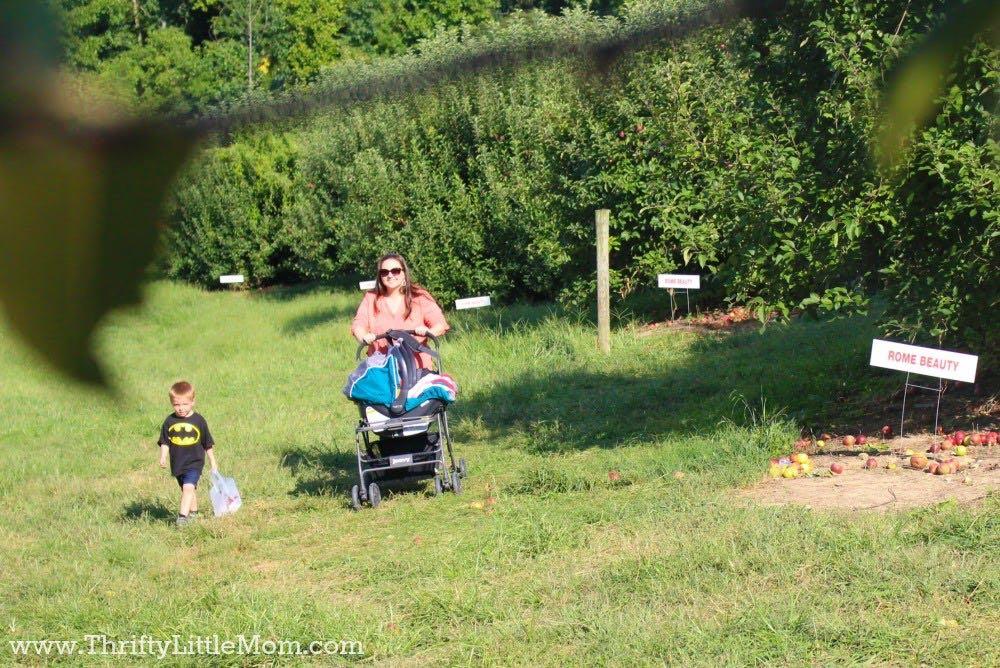 pushing-babies-through-apples