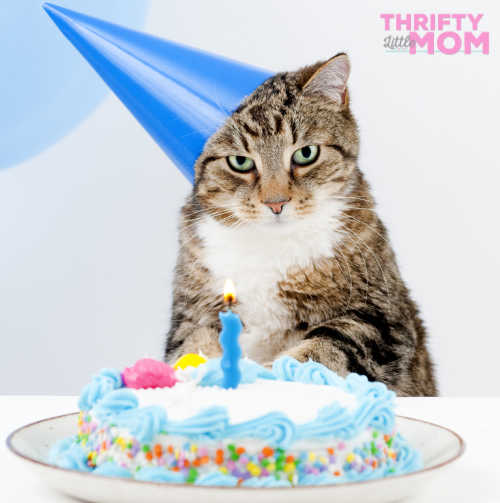 throwing a birthday party for your cat