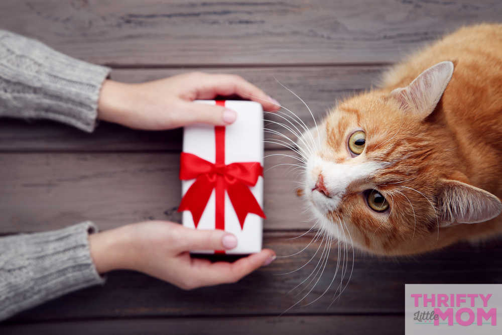 gifts to give your cat for their birthday
