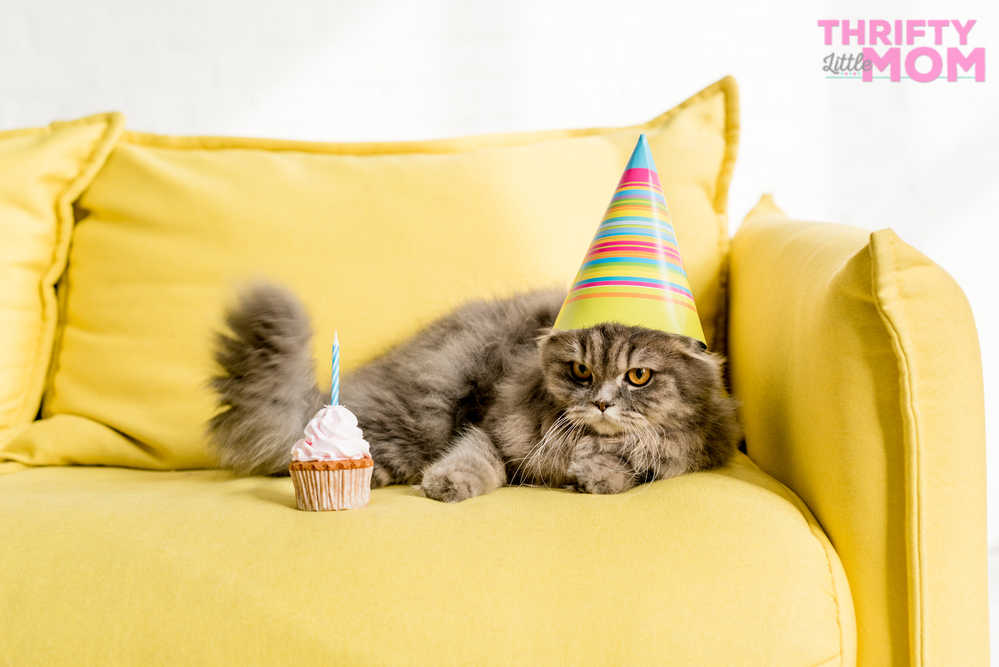 throw a birthday party for you cat