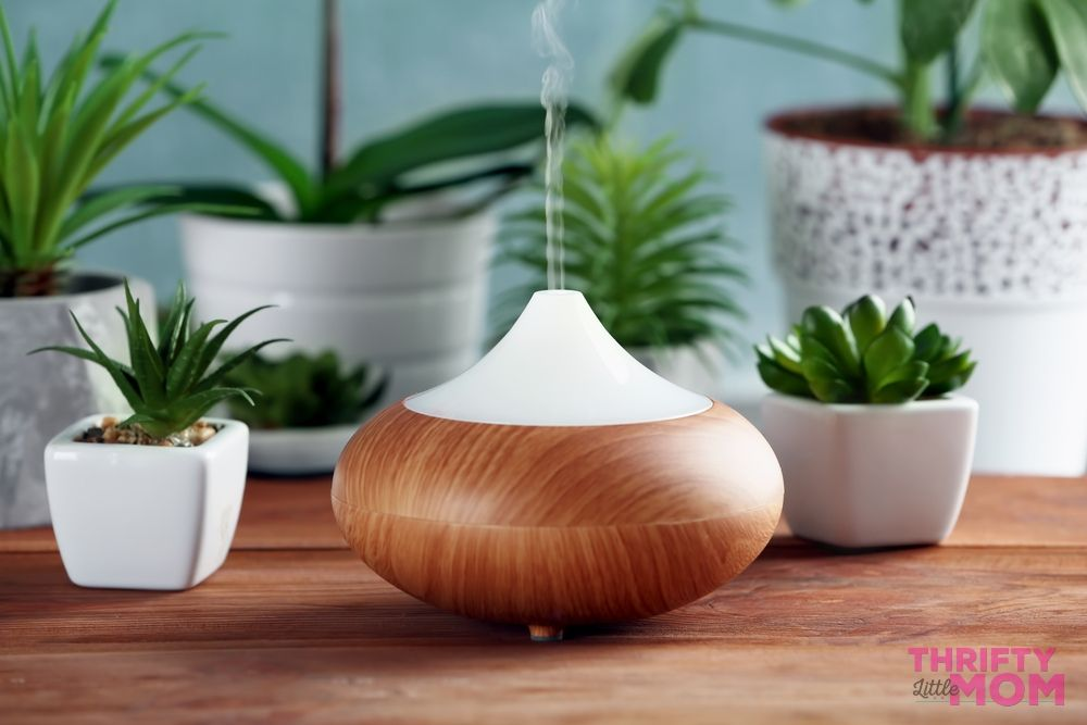 diffusers and succulents are popular mother